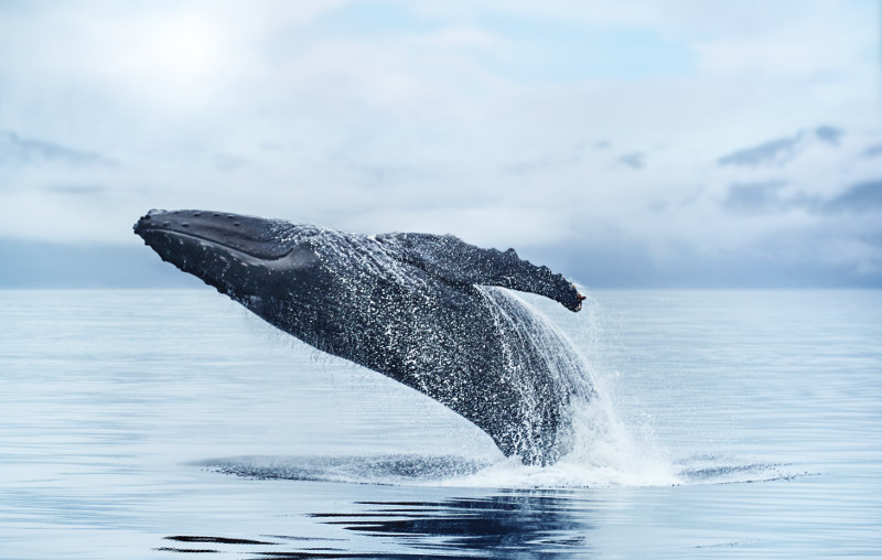 удивительный животный мир