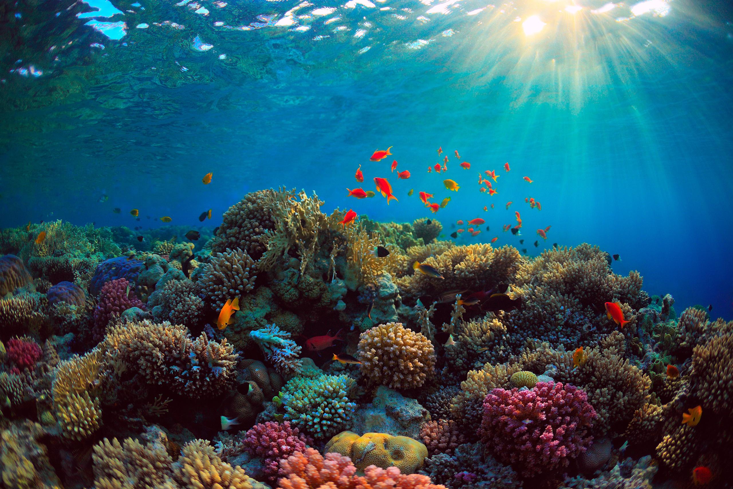солнце всегда картинки жизнь в морях и океанах разоблачающие фотографии