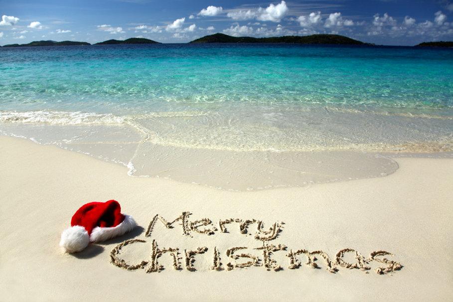 562935  tropical christmas p